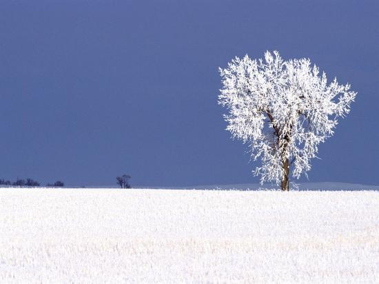 chuck-haney-hoar-frost-covers-tree-north-dakota-usa