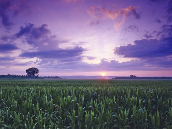 chuck-haney-sunrise-over-field-corn-hermann-missouri-usa