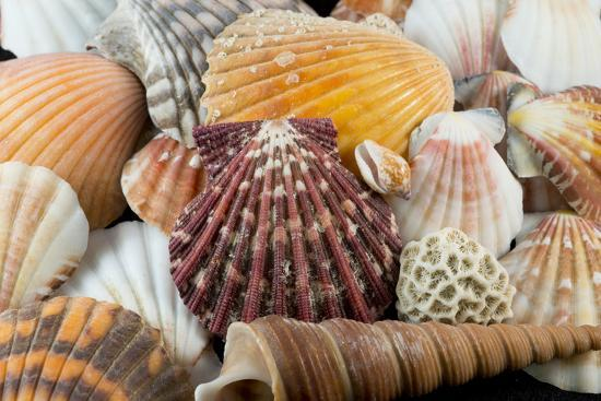 cindy-miller-hopkins-detail-of-seashells-from-around-the-world
