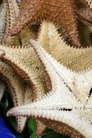 cindy-miller-hopkins-souvenir-starfish-and-seashells-for-sale-livingston-guatemala