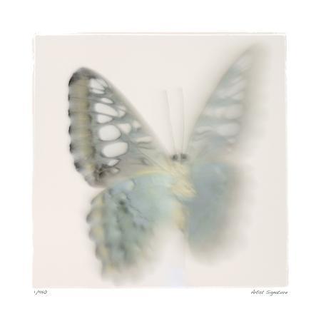 claude-peschel-dutombe-butterfly-study-6