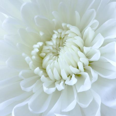 clive-nichols-close-up-of-white-flower