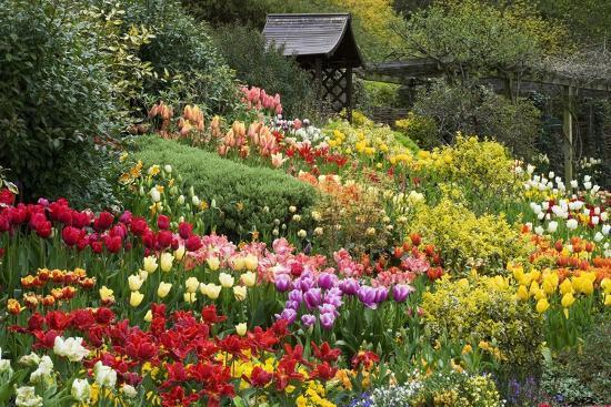 clive-nichols-tulips-at-little-larford