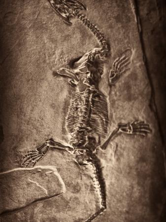 clive-nolan-plesiosaur