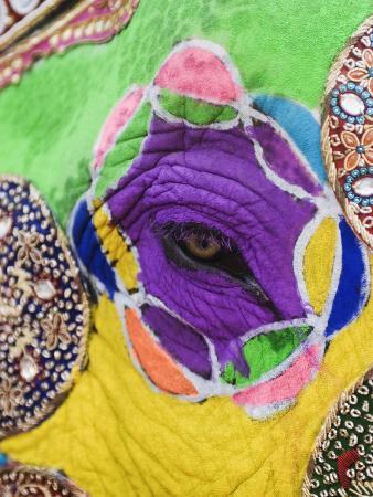 close-up-of-a-painted-elephant-elephant-festival-jaipur-rajasthan-india