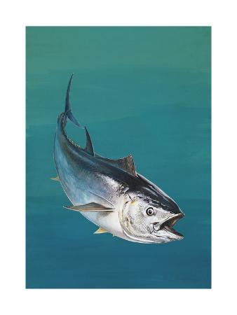 close-up-of-an-atlantic-bluefin-tuna-thunnus-thynnus