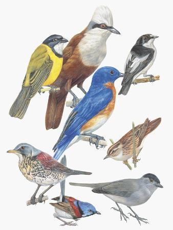 close-up-of-birds-of-the-passeriformes-family
