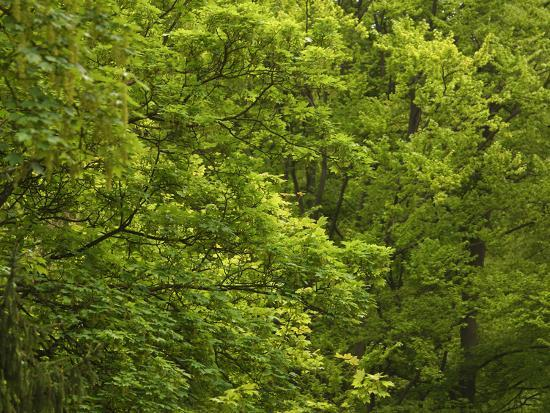 close-up-of-lush-green-trees-in-the-woods