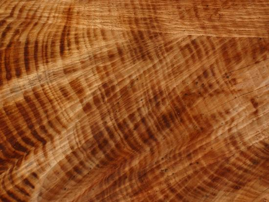 close-up-of-rings-of-layers-and-lines-of-rough-texture-on-a-cut-log