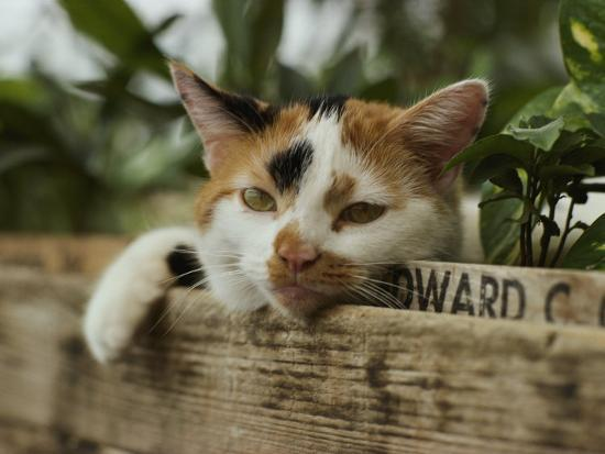 close-view-of-a-calico-cat-with-his-head-resting-on-flower-box-in-a-green-house