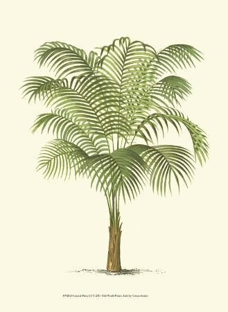 coastal-palm-iii