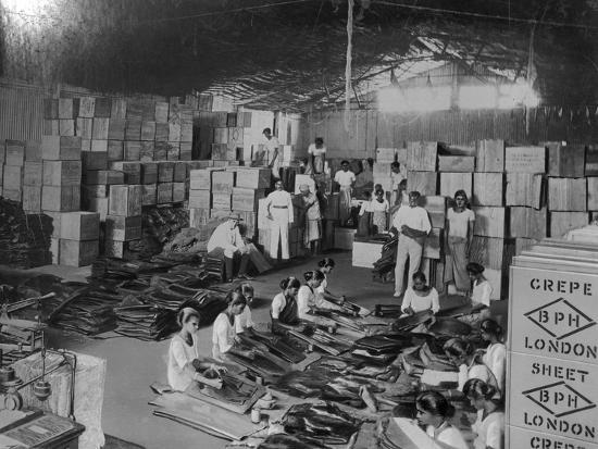 coconut-production-india-20th-century