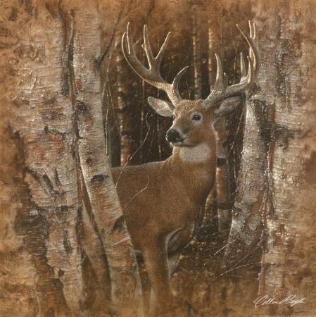 collin-bogle-birchwood-buck