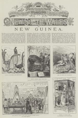colonial-and-indian-exhibition-new-south-wales-and-new-guinea