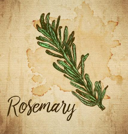 color-me-happy-rosemary-on-burlap