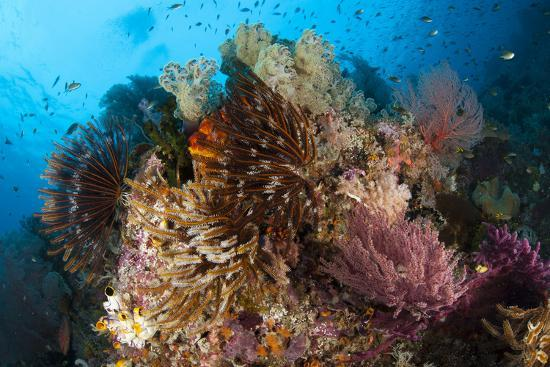 colorful-crinoids-and-soft-corals-adorn-a-reef-in-raja-ampat