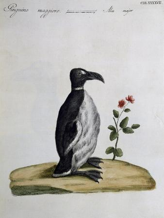 coloured-from-birds-history-1767-table-497