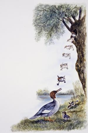 common-merganser-or-goosander-chicks-throw-themselves-from-nest-attracted-by-mother-call-mergus-me