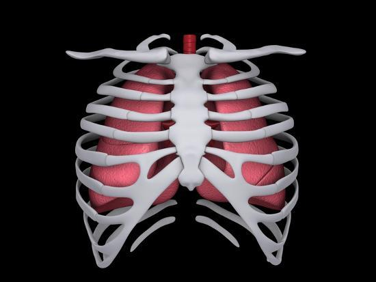 conceptual-image-of-human-lungs-and-rib-cage