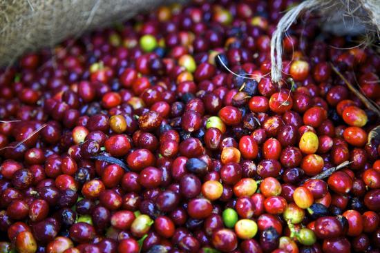 connie-bransilver-el-salvador-central-america-carmen-organic-coffee-estate
