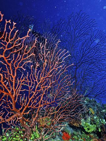 connie-bransilver-underwater-bonaire-netherlands-antilles