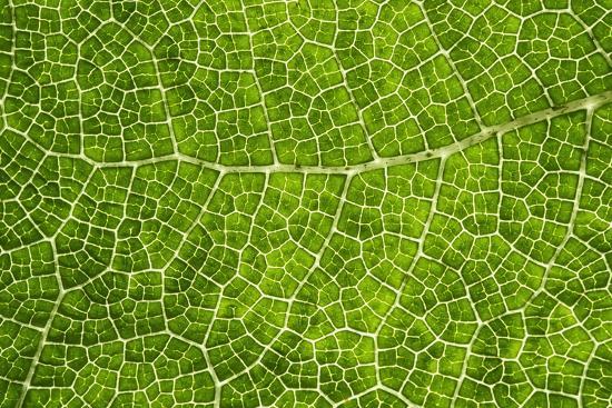 cora-niele-green-leaf-texture