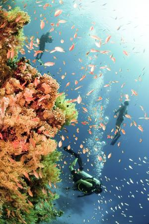 coral-reef-red-sea-ras-mohammed