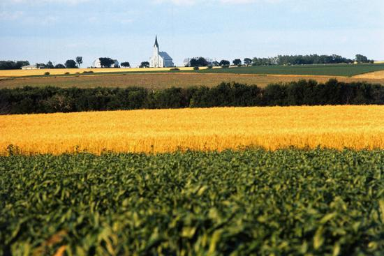 cornfield-with-church-in-background