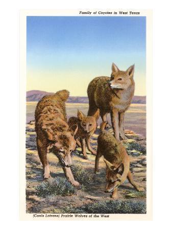 coyote-family