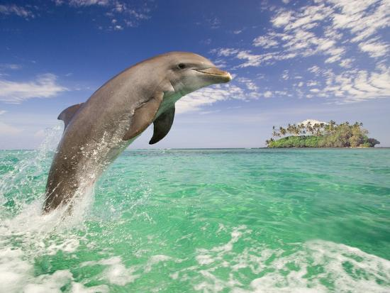 craig-tuttle-bottlenosed-dolphin-leaping-in-caribbean-sea