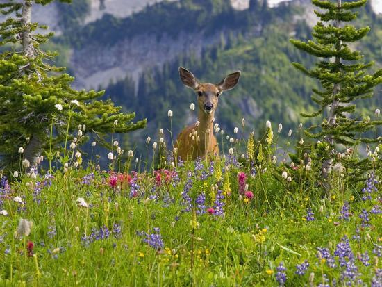 craig-tuttle-deer-in-wildflowers