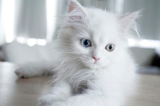 cristina-carra-caso-kitty-blue