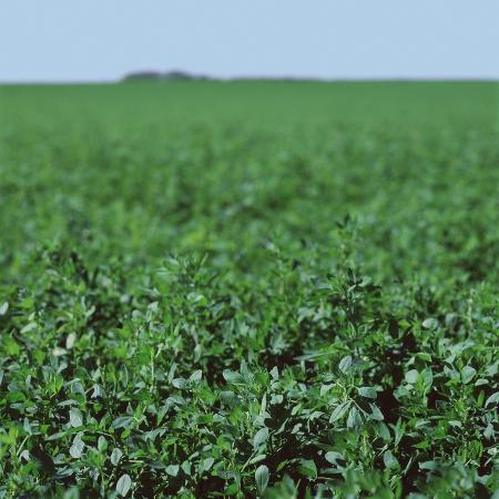 crops-growing-in-a-field