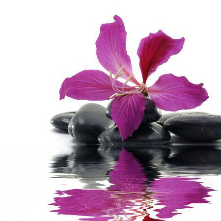 crystalfoto-reflection-for-black-pebbles-with-beauty-red-flower