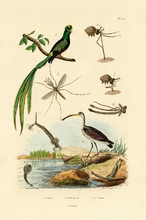 curlew-1833-39