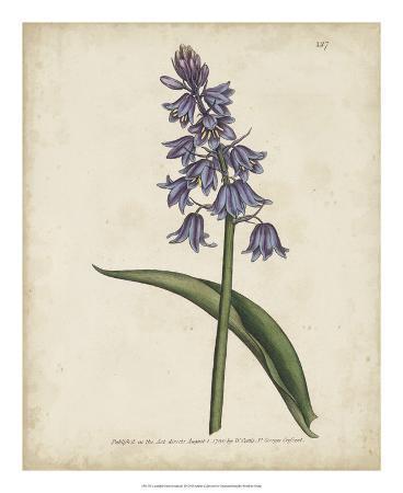 curtis-lavender-curtis-botanicals-ii