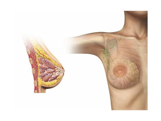 cutaway-view-of-female-breast-with-woman-figure-showing-lymphatic-glands