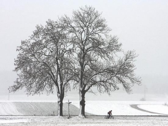 cyclist-passes-a-tree-covered-with-snow-southern-germany