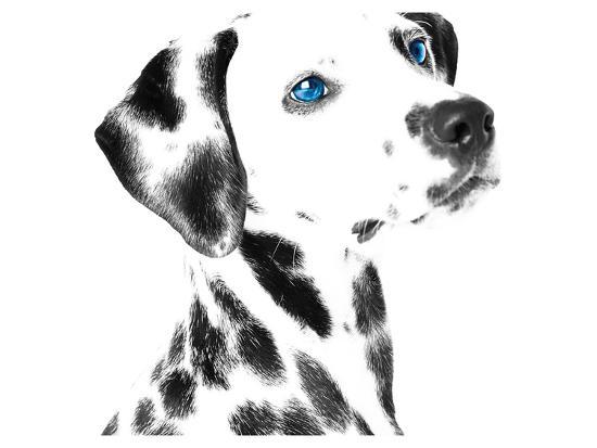 dalmatian-date-v