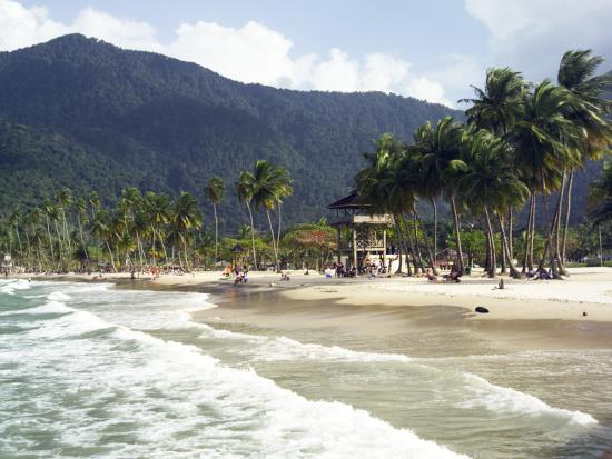 dan-gair-waves-roll-onto-palm-lined-beach