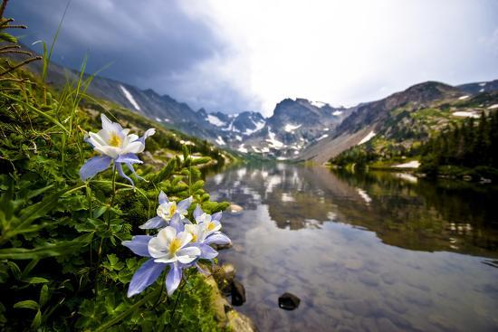 daniel-gambino-colorado-columbines-blooming-in-early-july-with-spring-run-off-indian-peaks-rocky-mountains