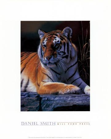 daniel-smith-bengal-tiger
