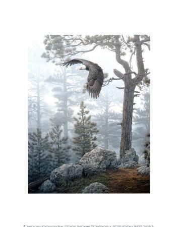 daniel-smith-shrouded-forest