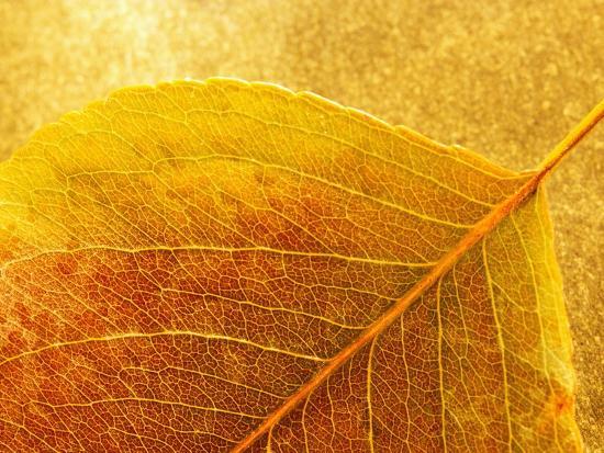 danilo-calilung-autumn-leaf
