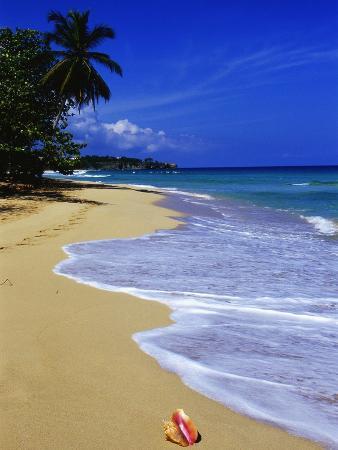 danny-lehman-conch-shell-on-playa-grande-beach