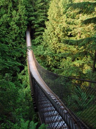 darlyne-a-murawski-lynn-canyon-suspension-bridge-in-vancouver-bc-vancouver-british-columbia-canada