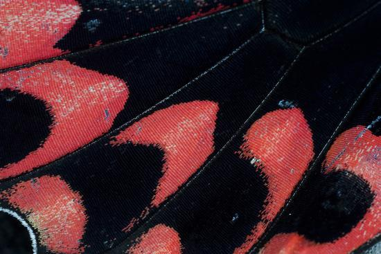darrell-gulin-close-up-detail-wing-pattern-of-tropical-butterfly