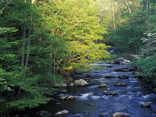 darrell-gulin-elkmount-area-great-smoky-mountains-national-park-tennessee-usa