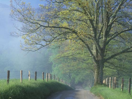 darrell-gulin-foggy-road-and-oak-tree-cades-cove-great-smoky-mountains-national-park-tennessee-usa
