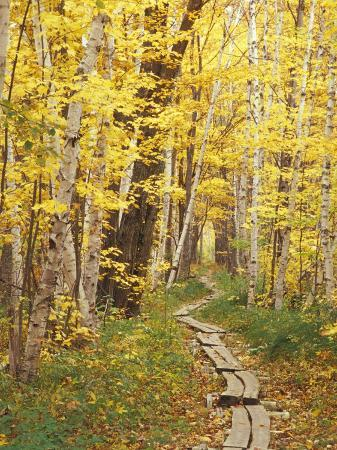 darrell-gulin-jessup-trail-and-birch-in-fall-color-acadia-national-park-maine-usa